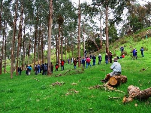 TOUR: Bambra Agroforestry Farm