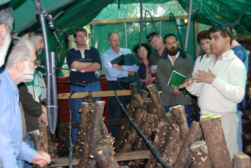 Log-grown Shiitake Mushroom course (Sun 21st Oct)